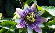 plantex mérieux - bref eco