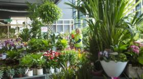 magasin Botanic, brefeco.com