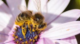 Les abeilles, tout un symbole