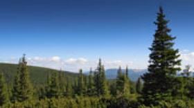 Foncière Forestière finalise l'acquisition de la forêt du Veyton