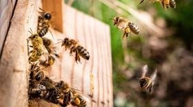 Gros projet drômois dans l'apiculture