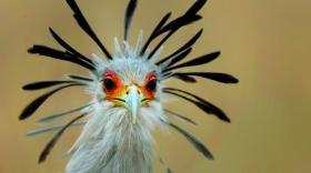 #Série d'été: Le parc des oiseaux à Villars-les-Dombes l'exotisme aux portes de Lyon et de Genève