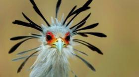 Le parc des oiseaux s'est équipé de la solution PayinTech - bref eco