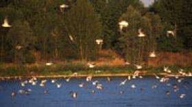 Un prix Natura 2000 pour le Département de la Loire