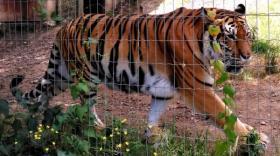 Parc Animalier d'Auvergne, brefeco.com