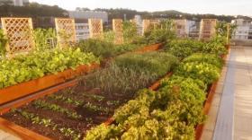 La Marmite urbaine a installé son premier potager sur le toit de Groupama Auvergne-Rhône-Alpes à Lyon.