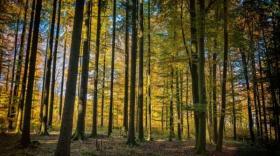 Foncière Forestière et GFF achètent 129ha de forêt en Auvergne
