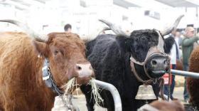 En 2019, 96000 professionnels de l'élevage et des secteurs connexes se sont rendus au Sommet de l'Elevage de Clermont-Ferrand