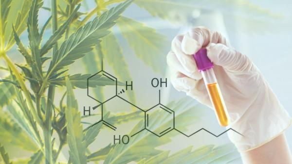 Greentech et Phytograde surfent sur la vague du cannabidiol
