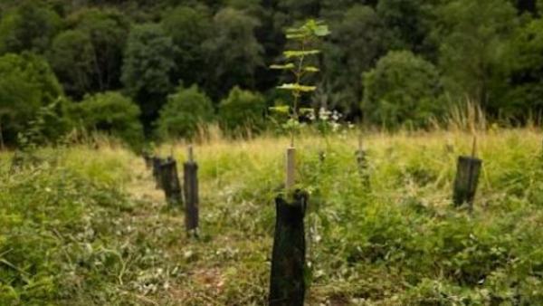 La Poste et Codeo plantent 700 arbres dans le cadre d'une compensation carbone