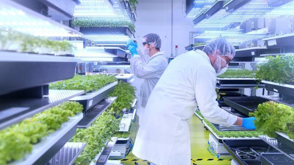 ferme urbaine lyonnaise - bref eco