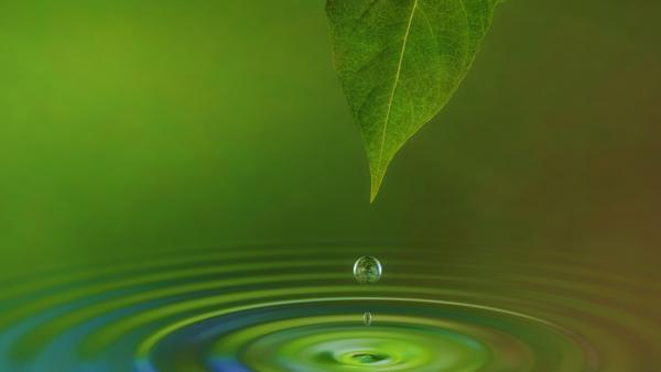 Sigma Clermont et des PME créent une chaire consacrée aux principes actifs des végétaux