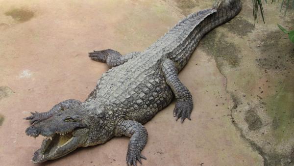 La Ferme aux Crocodiles veut fédérer les sites touristiques de proximité