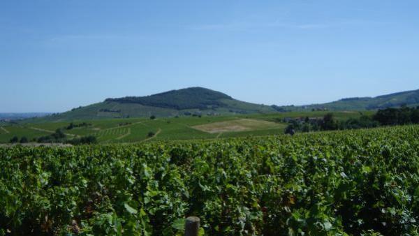 Agamy Vignobles veut récolter 5millions d'euros